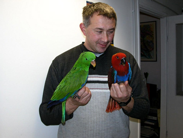 Simple yet Striking: The Eclectus Parrot | Aviaries Depot